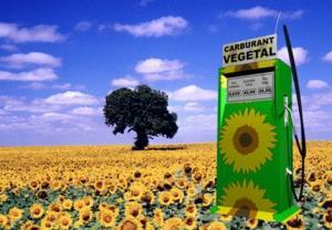 Huile 100% Végétale (HVB)