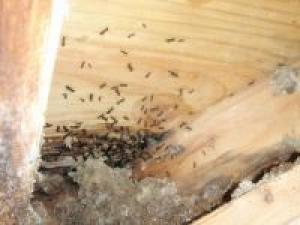 Des insectes dans votre chalet ?