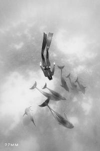 croisière à la rencontre des dauphins