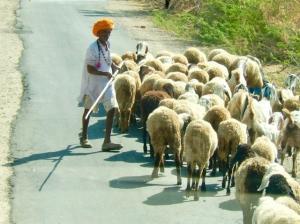 Circuits et séjours au rajasthan en Inde | Jodhpur Voyage