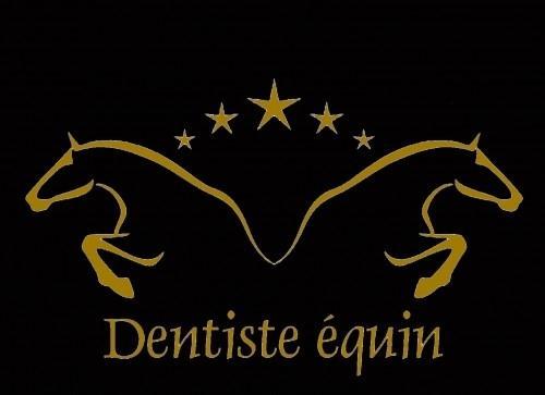 Der équin Zahnarzt(Zahnärztin) (Zahnpfle