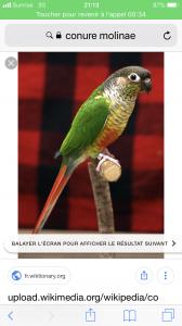 Cherche toutes races de perroquets