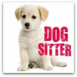 dog-sitter pour vos chiens