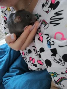 Ratons, bébés rats