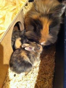 Magnifiques petits lapins câlins
