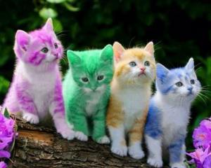 Je recherche deux chatons à donner ou à petit prix