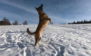 Cours canins (éducation / comportement), garde...