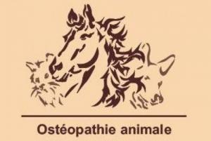 Ostéopathe pour animaux diplômée