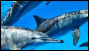 Nager avec les dauphins en mer Rouge du 2 au 9 septembre 2017