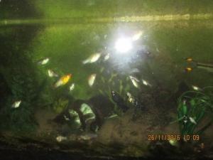 Aquarium avec poissons et meuble