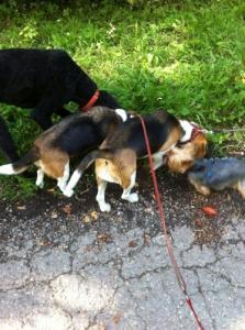 Promenade de chiens rive gauche
