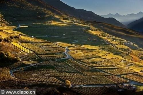 Cherche à acheter vigne région Sierre-Si