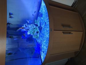 Aquarium juwel d angle